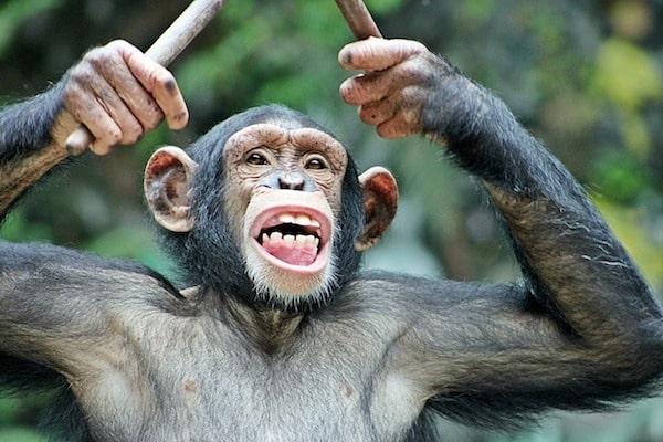 zelf ritmes leren, na-apen