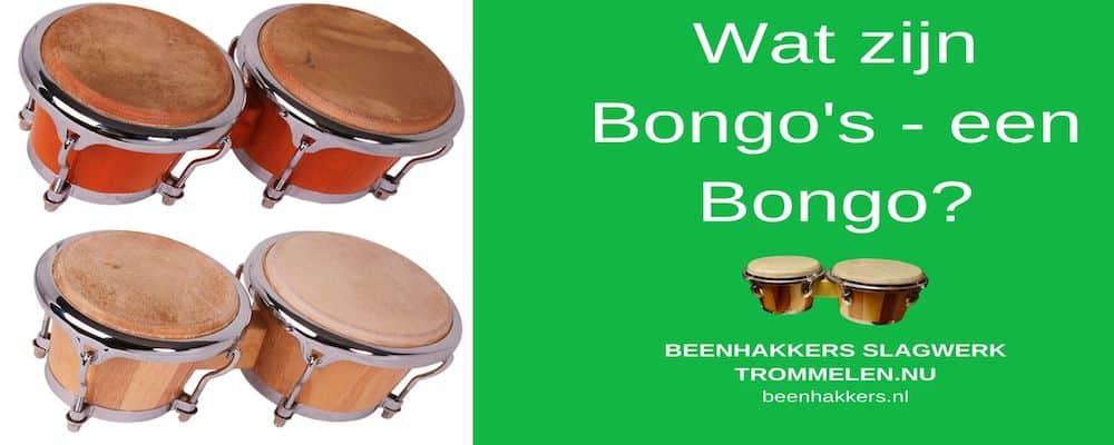 Wat is een bongo? Wat zijn bongos?