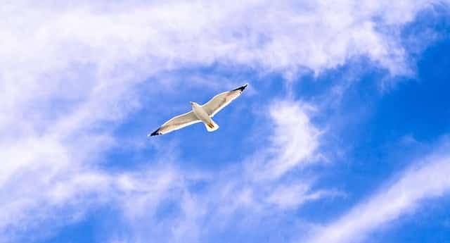 freedom bird - vrijheid vogel