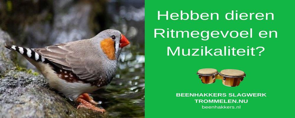 hebben dieren ritmegevoel en muzikaliteit?