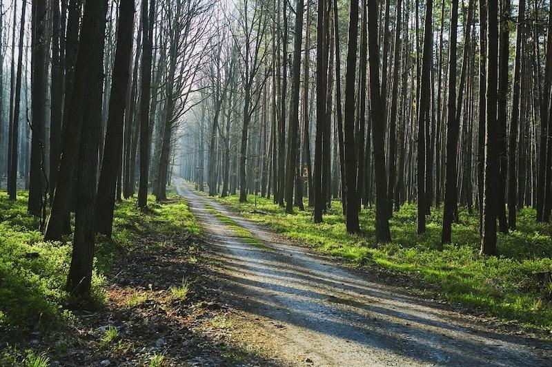 bomen ritme patroon